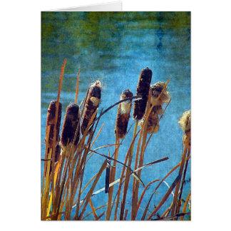 Cattails auf dem Teich Karte