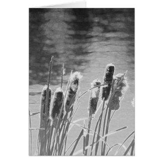 Cattails durch den Teich in Schwarzweiss Karte