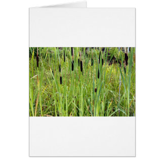 CatTails Karte
