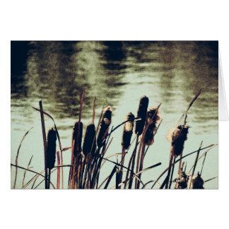 Cattails, Teich-Pflanzen Karte