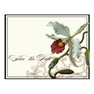 Cattleya Orchideen-Creme-Schwarz-Save the Date Postkarte