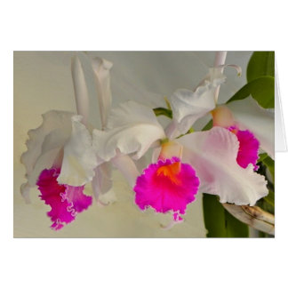 Cattleya Orchideen durch Sharles Karte