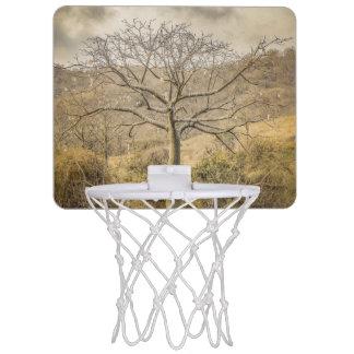 Ceiba-Baum an trockenem WaldGuayas Bezirk - Mini Basketball Netz