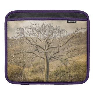 Ceiba-Baum an trockenem WaldGuayas Bezirk - Sleeve Für iPads