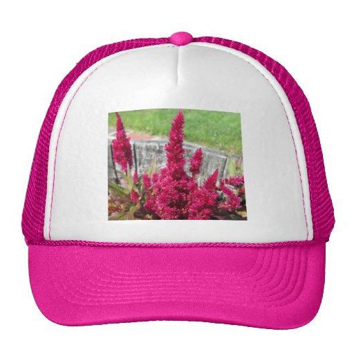 Celosia-roter rustikaler Zaun-Garten Baseball Kappe