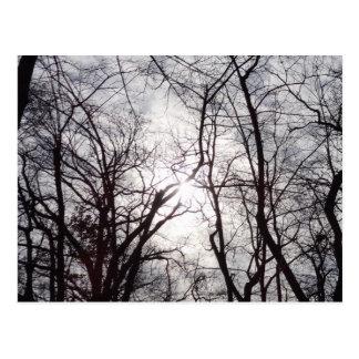 Central Park-Bäume im Winter Postkarte