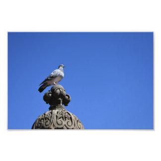 Central Park-Tauben-blauer Himmel-New- York Fotodruck