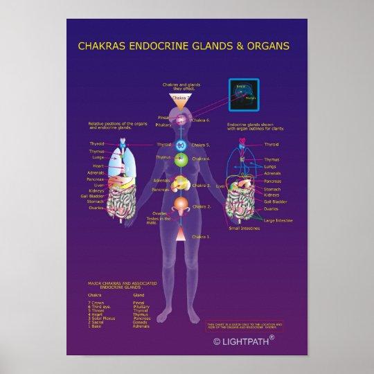Chakras endokrine Drüsen und Organe Poster | Zazzle