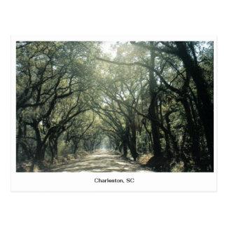 Charleston, Sc-Eichen Postkarte