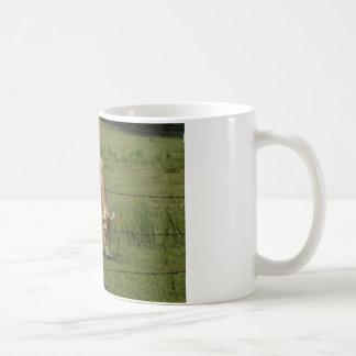 Charolais schüchtern das Weiden lassen auf dem Kaffeetasse