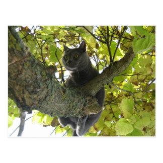 Chartreux im Baum Postkarte