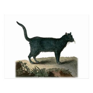Chartreux Katze Postkarte