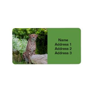Cheetah-Foto Adressaufkleber