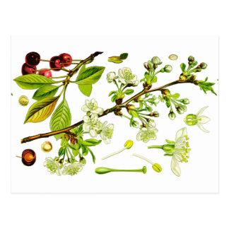 cherry postkarte