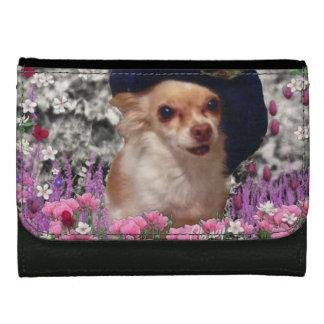 Chi-Chi in den Blumen, Chihuahua-Welpen-Hund,
