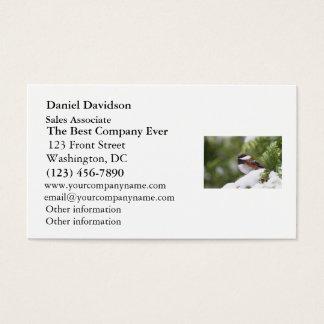 Chickadee im Schnee auf einem Zedern-Baum Visitenkarte