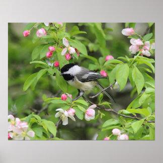 Chickadee- und Frühlingsblüten Poster
