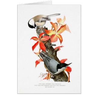 Chickadee und Kleiber Karte