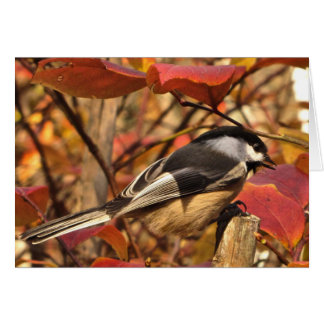 Chickadee-Vogel mit rosa Herbst verlässt Karte