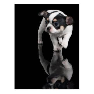 Chihuahua auf Schwarzem Postkarte