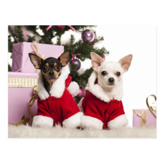 Chihuahua, der einen WeihnachtsAnzug sitzt und Postkarte