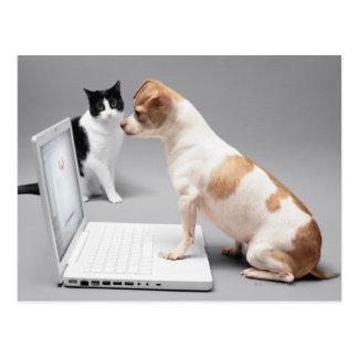 Chihuahua, die den Schirm eines Laptops Postkarte