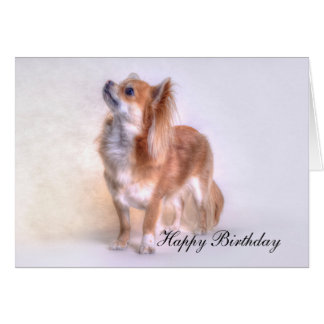 Chihuahua-Geburtstagskarte Grußkarte
