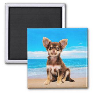 Chihuahua-Hund, der auf tropischem Strand sitzt Quadratischer Magnet