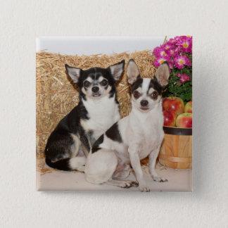 Chihuahua im Fall Quadratischer Button 5,1 Cm