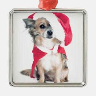 Chihuahua im Weihnachtskostüm Silbernes Ornament