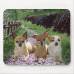 Chihuahua-lila Blumen Mousepad