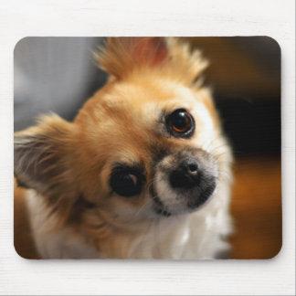 Chihuahua-Mausunterlagen addieren Ihr Foto Mauspad