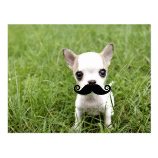 Chihuahua mit dem lustigen Schnurrbart im Garten Postkarte