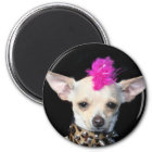 Chihuahua-Punk-Magnet Runder Magnet 5,1 Cm