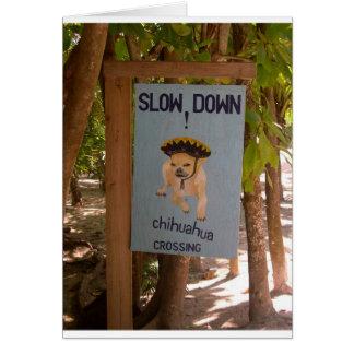 Chihuahua-Überfahrt in Belize Karte
