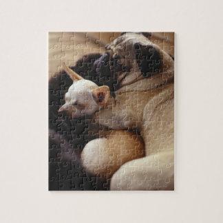 Chihuahua und Mops, Nahaufnahme schlafen Puzzle