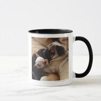 Chihuahua und Mops, Nahaufnahme schlafen Tasse
