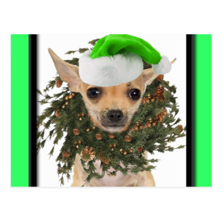 Chihuahua-WeihnachtsKranz u. -hut Postkarte