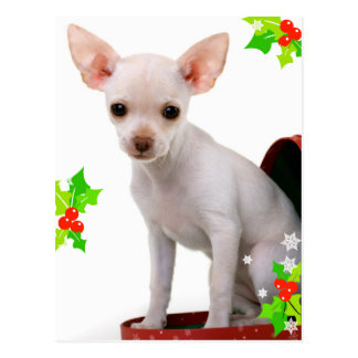 Chihuahua-Weihnachtspostkarte Postkarte