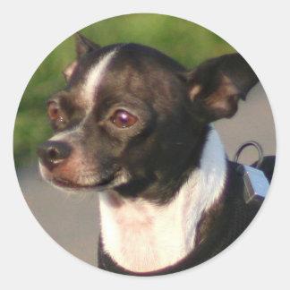 Chihuahuaaufkleber Runder Aufkleber