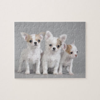 Chihuahuawelpen Foto Puzzles