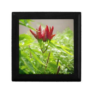 Chili-Blume Geschenkbox