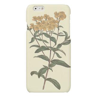 Chili-Ringelblumen-botanische Illustration