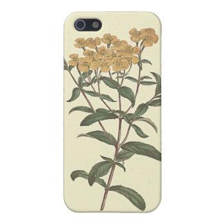 Chili-Ringelblumen-botanische Illustration iPhone 5 Hülle