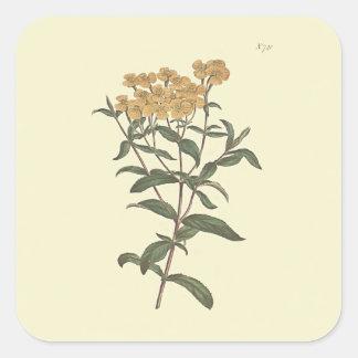 Chili-Ringelblumen-botanische Illustration Quadratischer Aufkleber