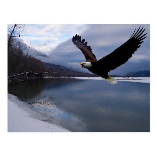Chilkat Eagle Konserven-Postkarte