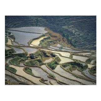 China, Yunnan-Provinz. Überschwemmte Reisterrassen Postkarte