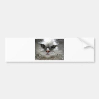 Chinchilla-persische Katze Autoaufkleber