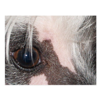 Chinese_Crested eyes.png Postkarte
