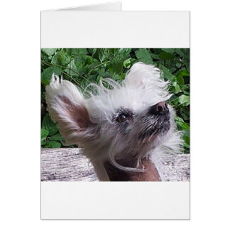 Chinese_Crested.png Karte